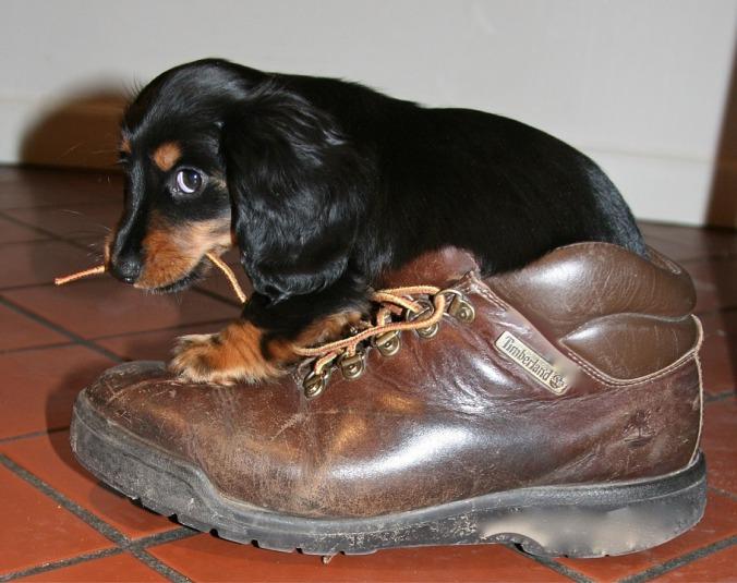 puppy-1577613_960_720