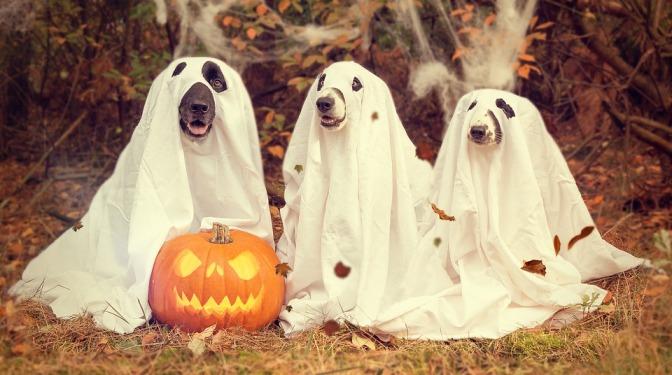neulich an Halloween...